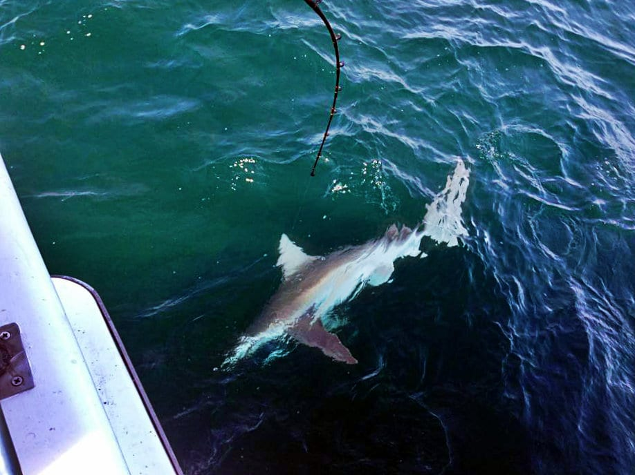 deepsea charters