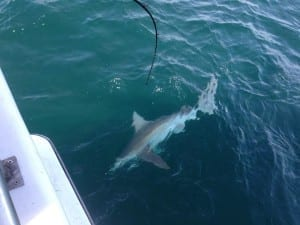 shark trips port canaveral florida obsession fishing charters
