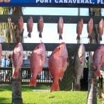 red snapper grouper port canaveral