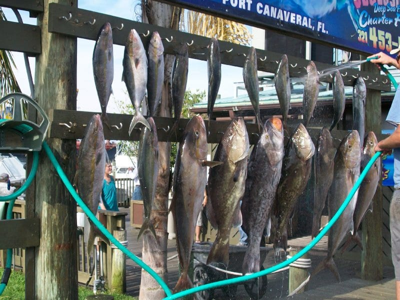 deep sea fishing report catch of the day