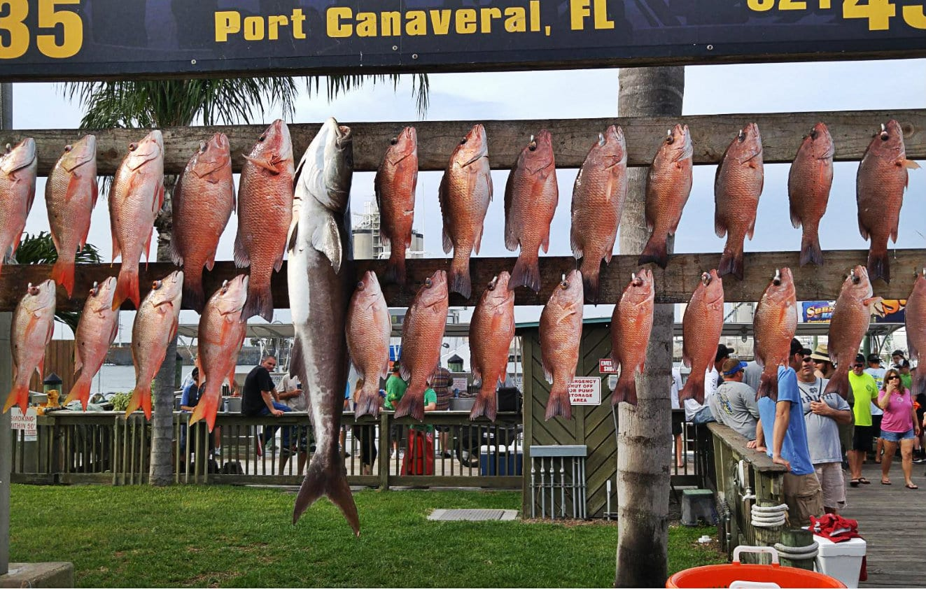 deep sea fishing mangrove snapper